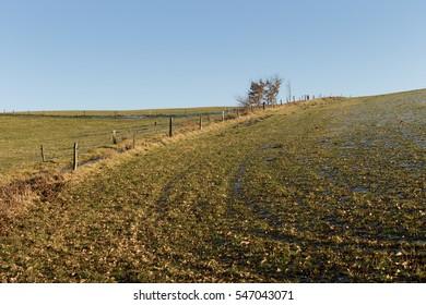 winter scene field