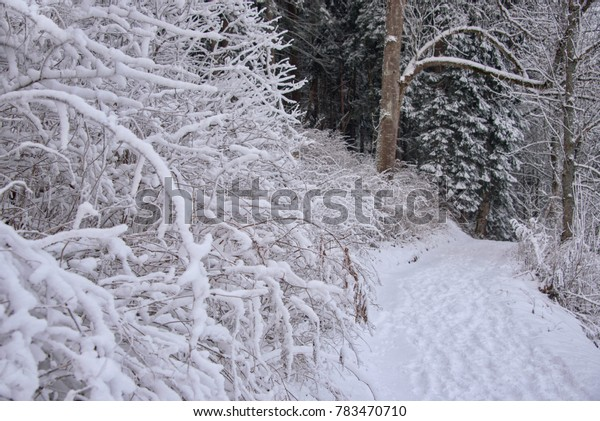 winter scene, forest path and branches covered with snow, Austria, Schladming