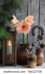 Winter scene with fresh amaryllis in clay pitcher, branch of cones, cones in ceramic cup, old authentic vintage lantern with candle, metal horseshoe on dark aged wooden background, vertical photo