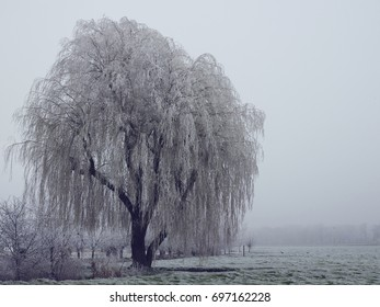 winter scene with frozen tree