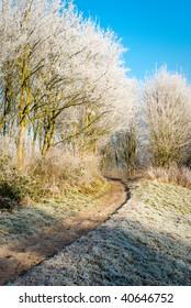 Winter scene: frozen trees and grass in a park.