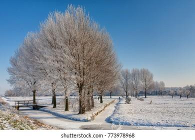 Winter scene with hoarfrost