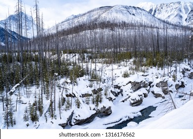 Winter scene in Kootenay National Park with burned forest fire trees, the Kootenay River and Canadian Mountains, all covered in snow
