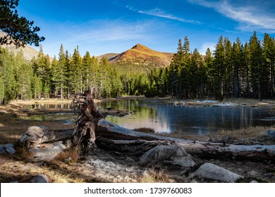Winter scene at lake at Yosemite National Park, Califronia, USA. Fallen tree in front of a lake with pine trees and mountains on a background.