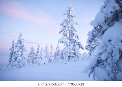 Winter Scene Lapland