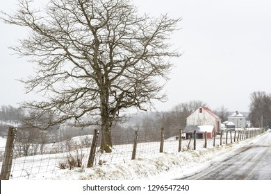 Winter scene of a large hardwood tree and fenceline leading to a barn and farmhouse during a driving snow storm in rural Appalachia.