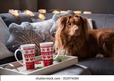Winter scene. Living room, tray with mugs, dog on the sofa.