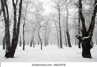 Winter scene at the park