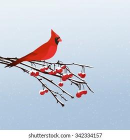 Winter scene with a red cardinal bird sitting on a rowan berry tree branch./Red Cardinal Bird