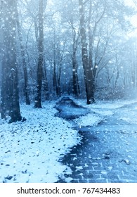 Winter scene with a small beech forest