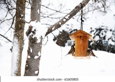 Winter scene with snow and birds. Peaceful and tranquil snowy winter photo of House sparrows in birdhouse.