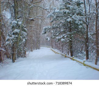Winter scene of snow covered walking trail with pine trees and wooden fence.