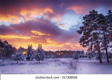 winter scene, snow forest at dawn, multicolored sky at sunrise