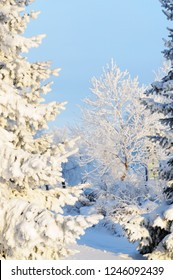 Winter scene with snow and frost covered trees.