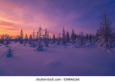 Winter scene. Snowscape. Forest, sunset, trees.