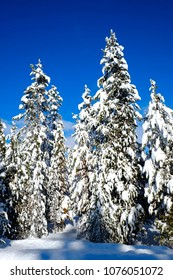Winter scene of snowy forest pine trees with shunshine and blue sky