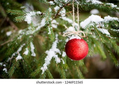 Winter scene in spruce and pine trees of one isolated red Christmas holiday ornament.  Bulb is tied with twine hanging in snow covered branches. Soft focus, bokeh background. Shallow depth of field.