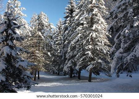 91794527e53d Winter Scenery Stock Photo (Edit Now) 570301024 - Shutterstock