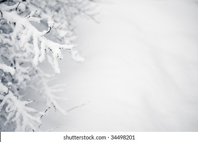 Winter scenery - black tree branches and white snow - shallow DOF