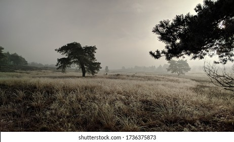 winter scenery Dutch Veluwe landscape, the largest push moraine complex in the Netherlands, formed by sand deposits of the Saalian glacial during the Pleistocene epoch, some 200,000 years ago