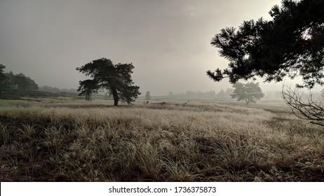 20万年ほど前の更新世期のサーリアの氷河の砂堆積物によって形成された、オランダで最も大きなプッシュモレーン複合体である冬の風景オランダ・ベルウェの風景