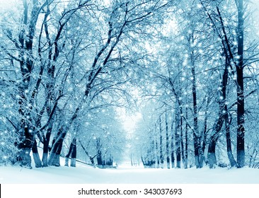 Winter scenery, frosty trees in a city park
