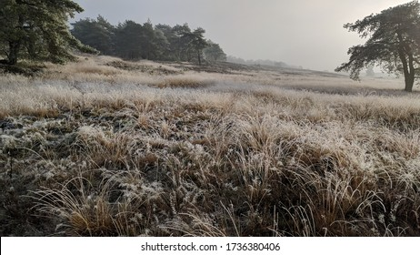 winter scenery grassy plains Dutch Veluwe landscape, the largest push moraine complex in the Netherlands, formed by sand deposits of the Saalian glacial during the Pleistocene epoch