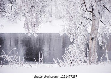 Winter scenery with snow covered trees on riverbank.