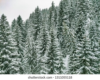 winter scenery with snow covered trees on a mountain