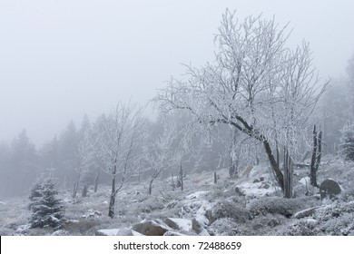 Winter scenery with snow and trees