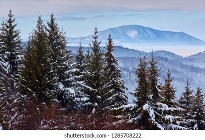 Winter scenery, snowy fir tree forest, hazy valleys in Piatra Mare mountain, near Brasov county, Transylvania, Romania.
