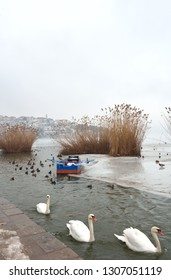 Winter scenery with some birds and swans swimming in half frozen lake Orestiada , a fishing boat trapped in icy lake waters and behind the reeds town of  Kastoria  as background