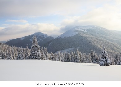 Winter scenery in the sunny day. Mountain landscapes. Trees covered with white snow, lawn and mistery sky. Location the Carpathian Mountains, Ukraine, Europe.