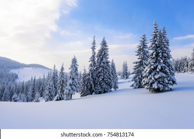 Winter scenery in the sunny day. Mountain landscapes. Location Carpathian national park, Ukraine, Europe. Fantastic fluffy Christmas trees in the snow. Postcard with tall trees, sky and snowdrift.