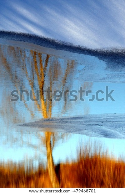 Winter scenery - tree reflecting in the water.