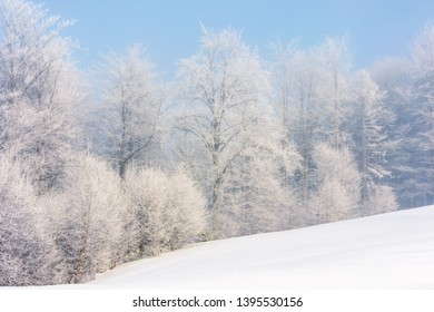 winter scenery with trees in hoarfrost on hillside. hazy weather on a bright sunny morning with clear blue sky