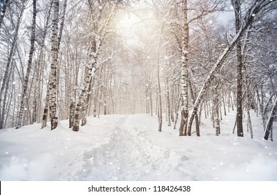 Winter scenic of Birchwood in mountains with snowfall in Kazakhstan