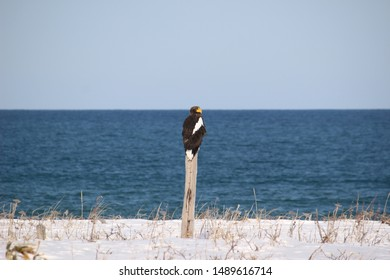 Winter sea and Steller's sea eagle scenery in Okhotsk, Hokkaido, Japan