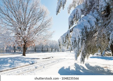 Winter season in city, road and trees after snowfall.