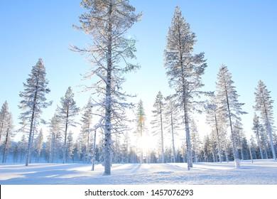 winter season in lapland finland