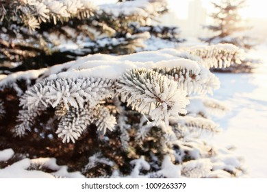 Winter season or Snow time, Winter day, Inspiration, Cold weather, Forest, Good day, Outdoor background, Nature background, Snow city