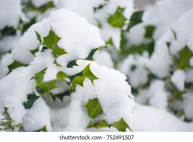 Winter season with white snow cover over on green tree leaves, happy time with family for travel in christsmast period even the weather will cold,beautiful winter in europe.