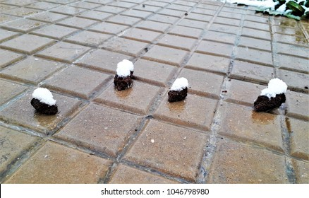 winter shit, fucking winter,christmas shit, Fucking Christmas,Photograph of dog shit with snow on top,