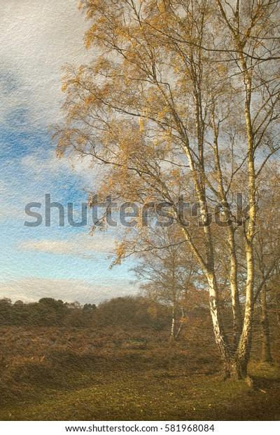 Winter Silver Birch Tree