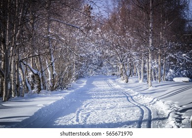 Winter Ski Trail