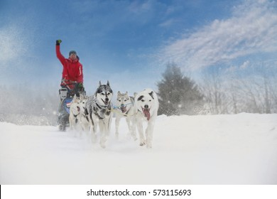 Dog-sled Images, Stock Photos & Vectors | Shutterstock