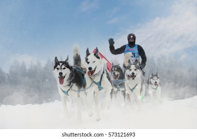 Winter sled dog race in the wonderful winter landscape in the background is blurred guide dogs. Winter Sled dog racing on the circuit.