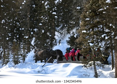 Winter Sleigh Rides Alberta Canada Lake Louise