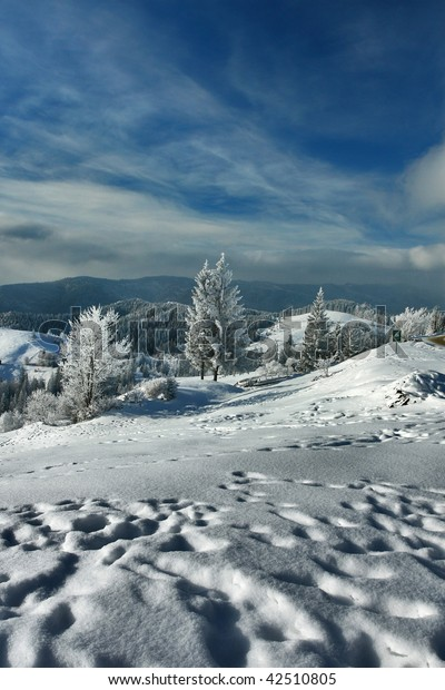 Winter slope with frozen trees and blue sky in Carpathians.