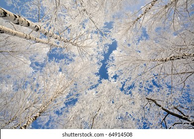 Winter snow branch blue clear sky